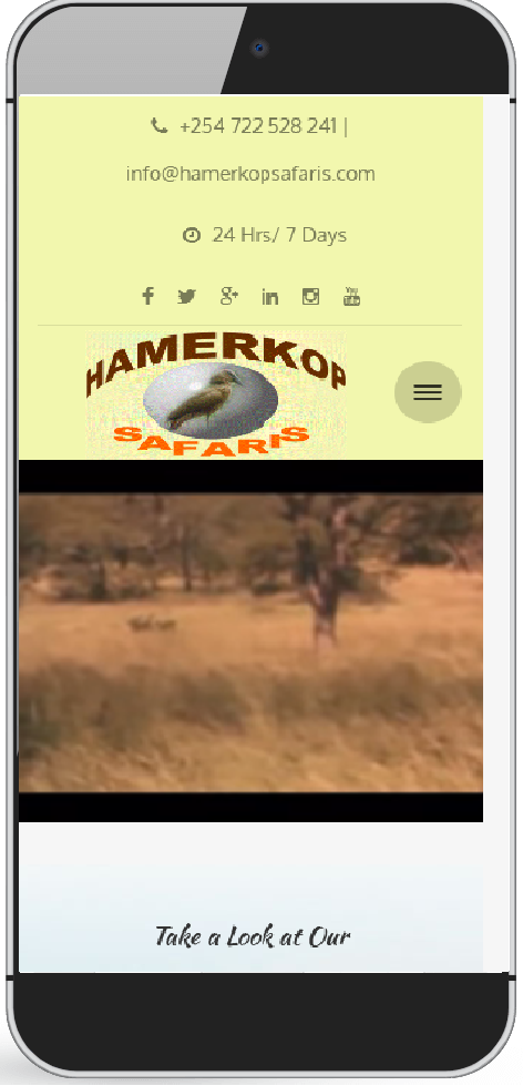 hamerkop safaris